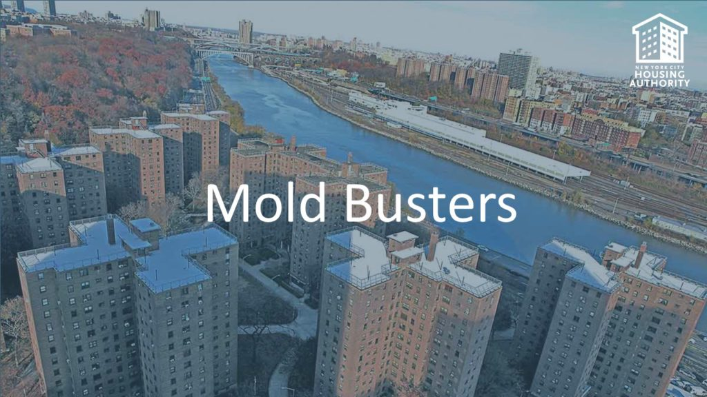 Mold Busters